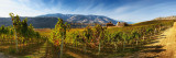 Burrowing Owl Winery (5383-5528)