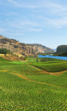 Blue Mountain Vineyard (8629-8820)