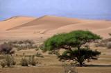 Dunes du wadi Araba