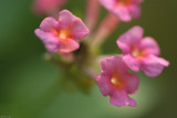 Fung Yuen Butterfly0067.jpg