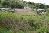 Plantaciones de Durazno