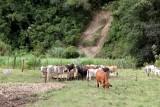 Haciendas Ganderas de la Region