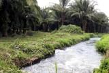 Sistema de Irrigacion en las Fincas