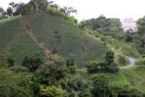 Cultivos que se Aprecian en la Ruta Hacia la Cabecera