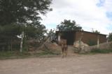 Vivienda Tipica en el Camino Hacia la Cabecera