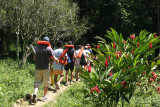 Flores Silvestres Adornan el Sendero a la Cueva