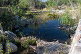 Lower Sabino Creek Pond