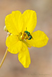 Senna & Bee