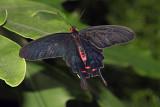 IMG_0019_papillon_900.jpg