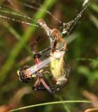 IMG_6880-araignée-sauterelle-900.jpg
