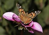 _MG_9335-papillon-900.jpg