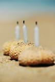 birthday urchins