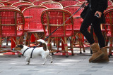 One  Dog on the Champs Elysees