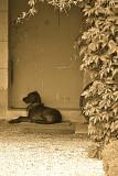 Dog Resting in Front of Door