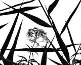Beach Reeds
