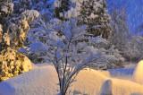 Snow Scenes February 2009