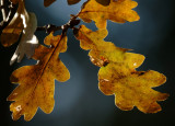 AutumnLeaves 25b.jpg