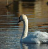 Swan 90.jpg