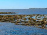 Fringe Coral Reef