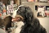 Loki at the Pet Store