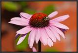 Flowers LR