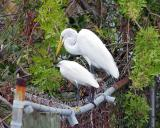 Egrets, I had a few