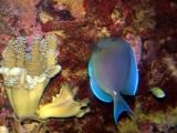 Fascinating Aquarium