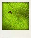 Bug On Leaf.