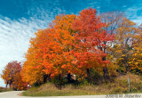 Fall Colors Around Corner