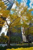 Downtown Toronto In Fall