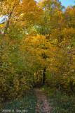 Bruce Trail in Fall