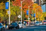 Fall in Ryerson University