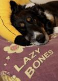 Lazy Bones ;-)
