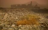 Rhosydd in the mist 2