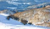 big tree hill.jpg
