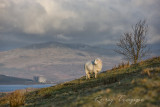 Rhiw Goch - Trawsfynydd