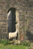 Cwmorthin ruins