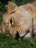 Mid morning nap