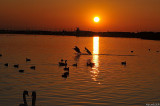 _DSC4627.jpg  Marine lake nl.jpg
