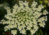 whiteflowersbyroad.jpg
