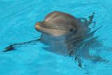 dolphinsurfaced1.jpg