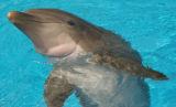 dolphinsurfaced2.jpg