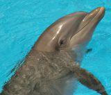 dolphinsurfaced3.jpg