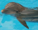 dolphinsurfaced5lge.jpg