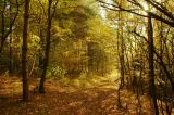 Slovak forests - Autumn
