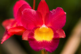 Orchids from an orchid farm