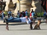 A nap and the Guard, Paris