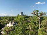 View from El Mundo Perdido, Tikal