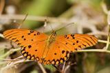 mariposa101