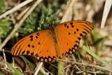 mariposa301
